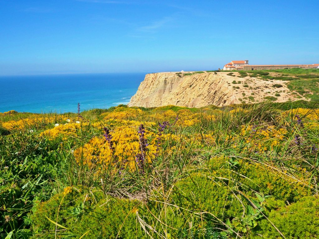 Cape Espichel brings such a beautiful scenery with flowers blooming.