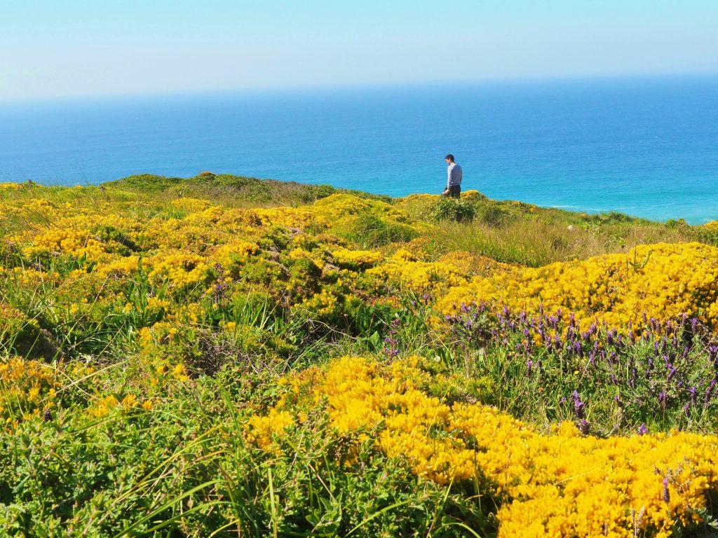 The meadows and the ocean at Cape Espichel, Setubal, Portugal