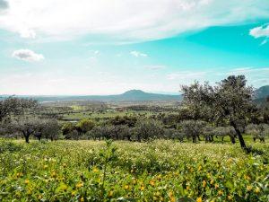 Cherry Blossom In Rural Portugal 15 - Hortense Travel