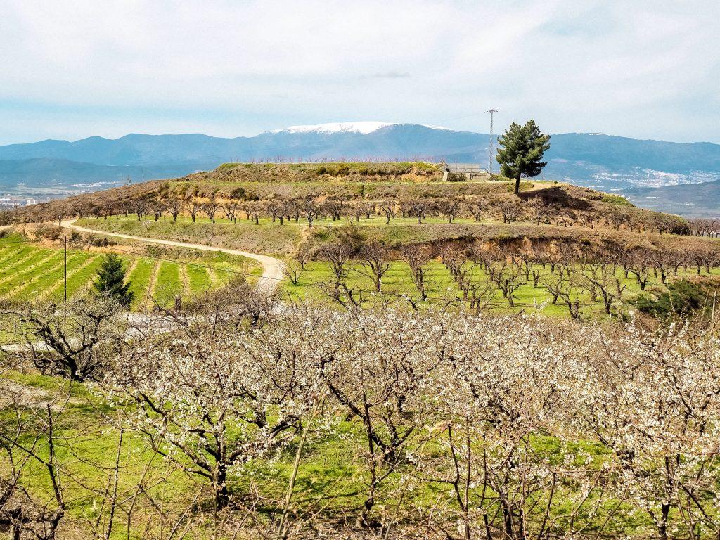 Portugal Hidden Gems Cherry Blossom Viewing