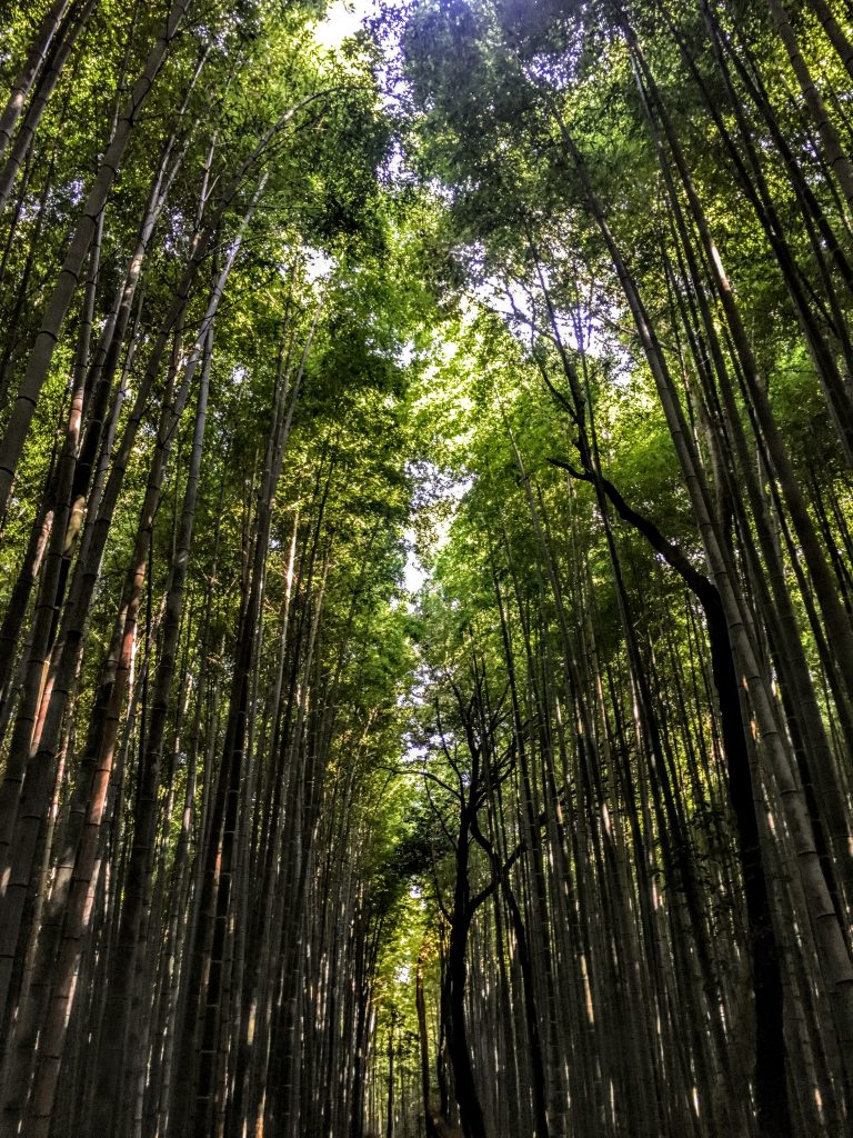 Things-to-do-in-Kyoto-on-Your-First-Time-Visit-25