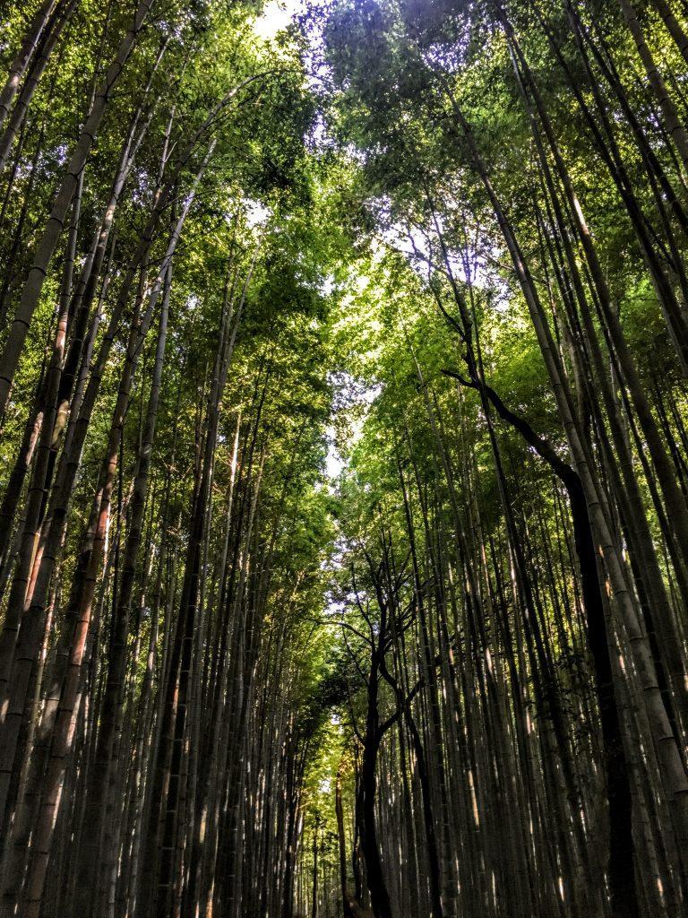 Arashyama Bamboo Forest