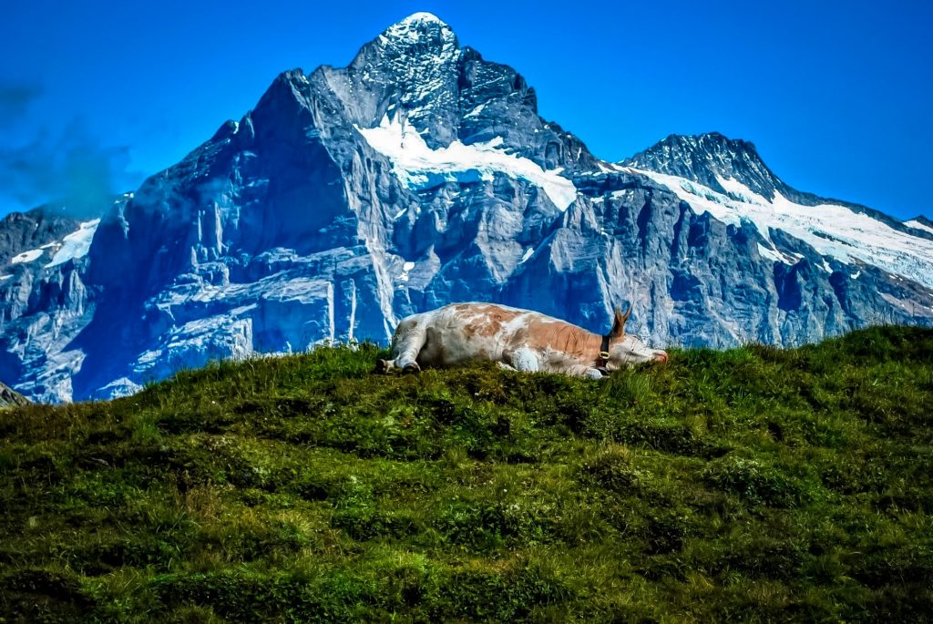 Top 10 Countries to visit in 2019-Switzerland2