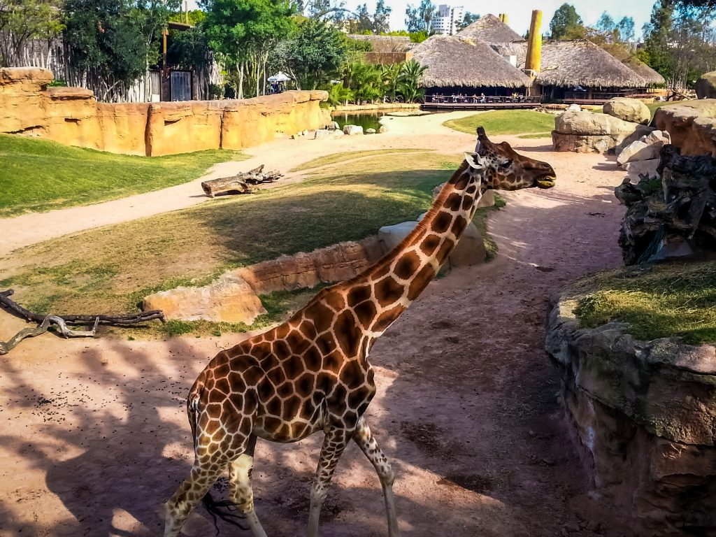 Meet the Animals at the Bioparc in Valencia