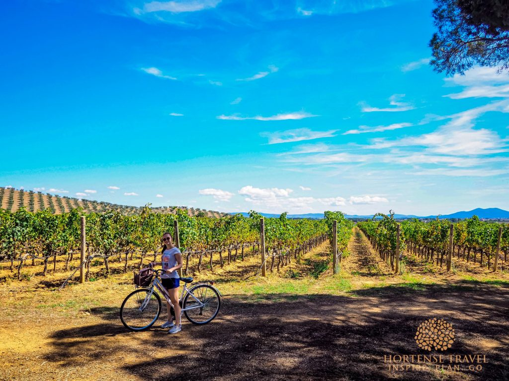 Bike among the vineyards
