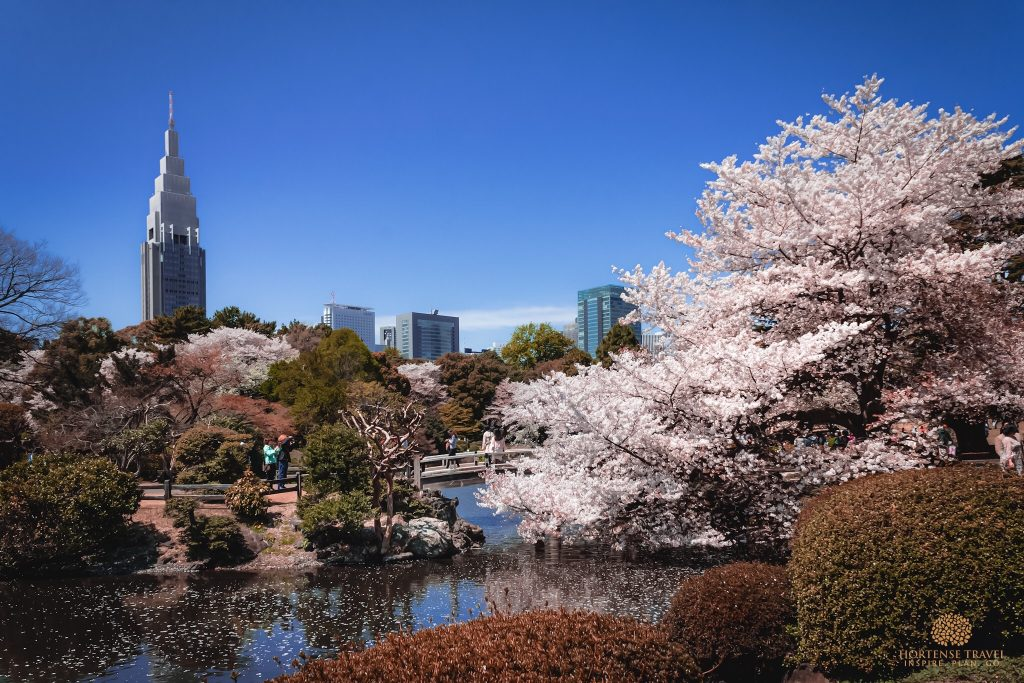 Get A Taste Of Japan With This Perfect One-Week Itinerary