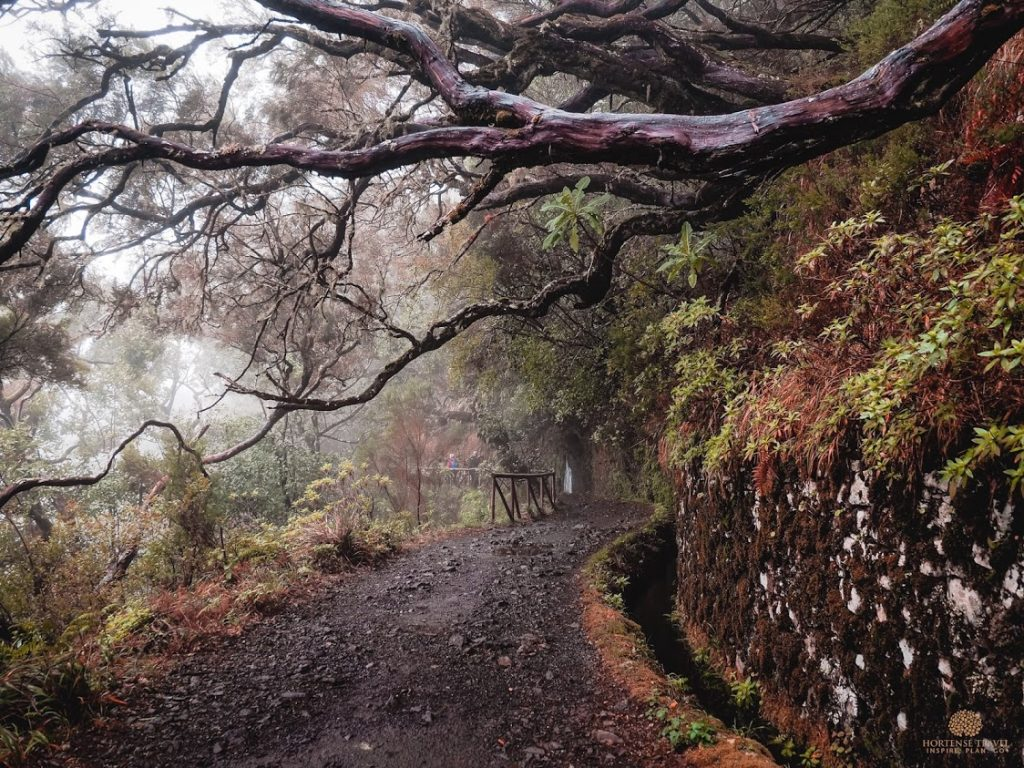 The 15 Most Adventurous Things To Do In Madeira - Hortense Travel